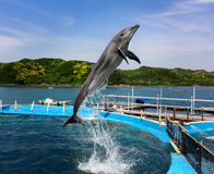 Delfinu nurkowy basen Zdjęcie Stock