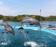 Delfinu nurkowy basen Obraz Royalty Free