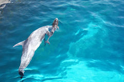 Delfinu nurkowy basen Zdjęcia Stock