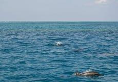 delfinu ocean Fotografia Royalty Free
