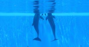 2 delfinu Zdjęcia Royalty Free