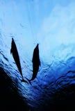 delfinu przedstawienia tunel dwa Zdjęcia Royalty Free