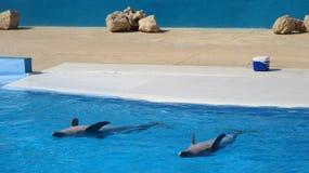 Delfinu przedstawienia występ zdjęcia royalty free
