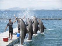 delfinu przedstawienie Zdjęcia Royalty Free