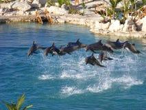 Delfinu przedstawienie Fotografia Royalty Free