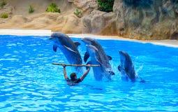 Delfinu przedstawienie obrazy stock