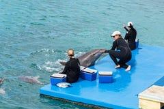 Delfinu przedstawienie przy Curacao akwarium Zdjęcie Royalty Free