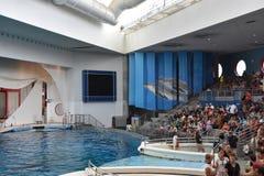 Delfinu przedstawienie w Baltimore, Maryland zdjęcia royalty free