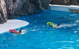 Delfinu przedstawienie w zoo Zdjęcia Royalty Free