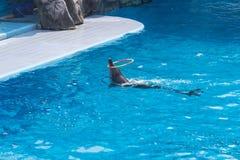 Delfinu przedstawienie w zoo Zdjęcia Stock