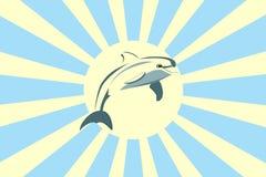 delfinu słońce Zdjęcie Stock