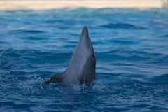 Delfinu spełnianie przy waterpark fotografia royalty free