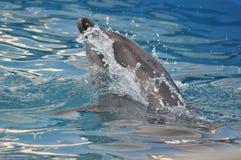 Delfinu wody pluśnięcie obraz royalty free