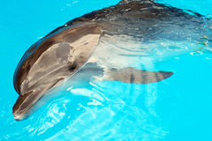 delfinvatten Royaltyfri Foto