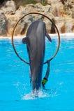 delfiny Fotografia Stock