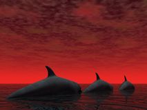 delfiny 3 royalty ilustracja