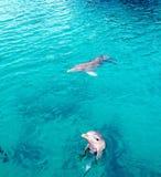 Delfiny Bahamas Fotografia Royalty Free