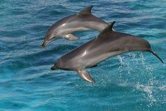 delfiny butlonose jumping Obrazy Stock