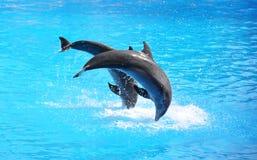 delfiny dwa Fotografia Royalty Free