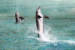 delfiny dwa Zdjęcia Stock