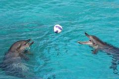delfiny dwa Obraz Royalty Free