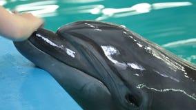 Delfiny pływa w jasnej błękitne wody basenu zbliżenie zbiory