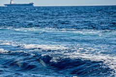 Delfiny podczas gdy skaczący w głębokim błękitnym morzu Zdjęcie Royalty Free