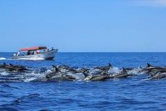Delfiny skacze w Baj Kalifornia zdjęcia stock