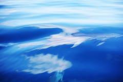 Delfiny w ocean fala obraz stock