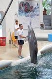 Delfiny w dolphinarium obrazy stock