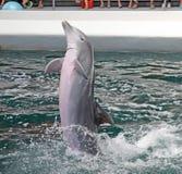 Delfiny w dolphinarium obraz royalty free