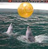 Delfiny w dolphinarium fotografia stock