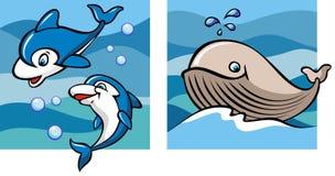 delfiny wielorybi Zdjęcia Stock