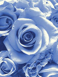 Delft Blue wedding bouquet. Cyanotype photographic reproduction of a very beauriful wedding bouquet with brownish (very special!) roses Stock Photos