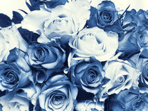 Delft Blue wedding bouquet. Cyanotype photographic reproduction of a very beauriful wedding bouquet with  wonderful roses Stock Images