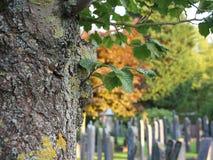 Peaceful cemetery Stock Image