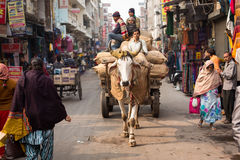 DELHI, INDIA - DEC 31: The Cow Carries A Cart On The Streets In Stock Photos
