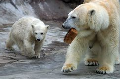 Delicacy. The she-bear and the kid with bread Royalty Free Stock Images