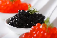 Delicacy black and red caviar macro in white spoons. horizontal Royalty Free Stock Image
