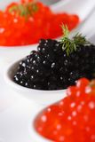 Delicacy black and red caviar macro in white spoons. Vertical Stock Images