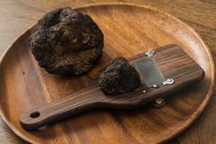 Delicacy mushroom black truffle royalty free stock photos