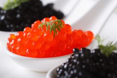 Delicacy red and black caviar fish macro horizontal. Delicacy red and black caviar fish macro in white spoons on a plate. horizontal stock image