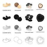 Delicacy, treats, product and other web icon in cartoon style.Nut, cashew,macadamia, icons in set collection. Delicacy, treats, product and other  icon in Stock Photos