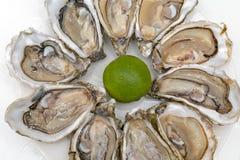 Delicadeza de las ostras foto de archivo
