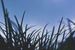 Delicado da grama de aparecimento acima imagens de stock