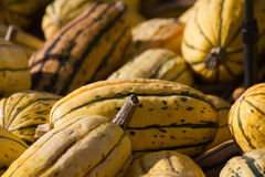 Delicata Royalty Free Stock Photos