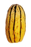 Delicata squash Royalty Free Stock Images