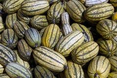 Delicata squash Stock Image
