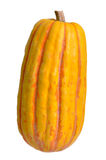 Delicata Squash. Yellow Delicata squash isolated on white with clipping path Royalty Free Stock Image