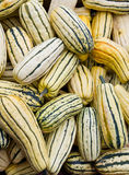 Delicata squash on display Stock Image